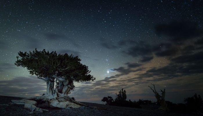Astronomy Festival, Great Basin National Park, Nevada | Parks100