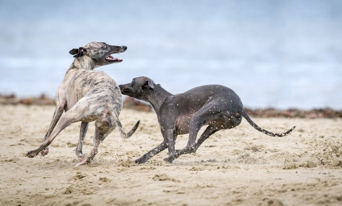 The Gathering of the Greyhounds, Pixabay, Utah Adventure Bucket List | Parks100