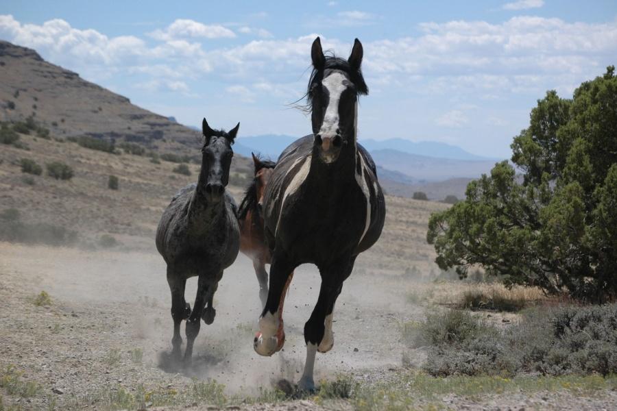 Sulplur Herd Management Area | Utah | Adventure Bucket List | Parks100