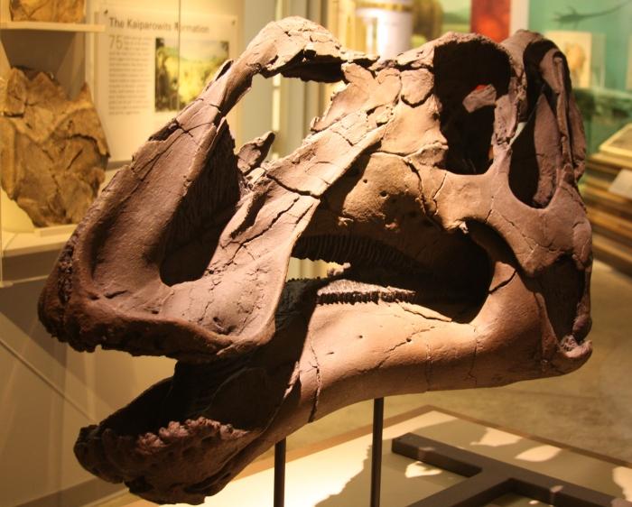 Gryposaurus, Grand Staircase Escalante, Utah Adventure Bucket List | Parks100