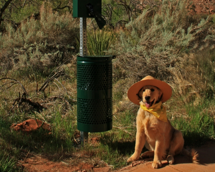 Dog Friendly Zion National Park, NPS   Parks100
