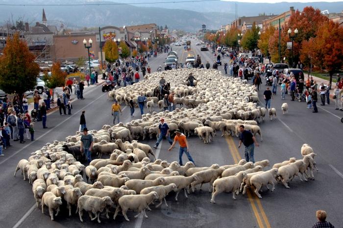 Cedar City Sheep Parade, David Handschuh, Utah Adventure Bucket List | Parks100